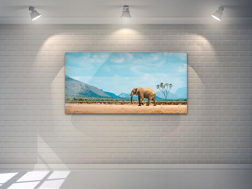 Africa Wildlife - Wandbild - Kenianischer Elefant 2