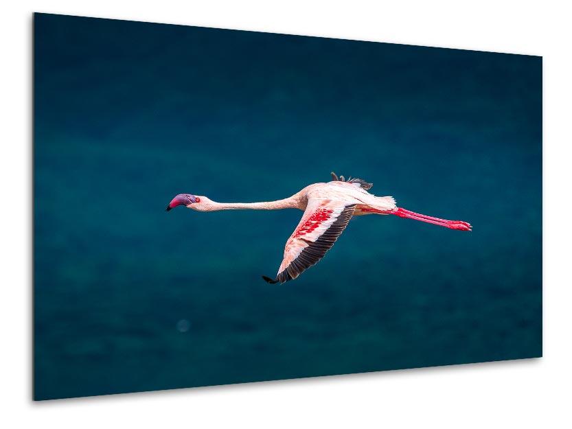 Wandbild Flamingo am Lake Bogoria 1