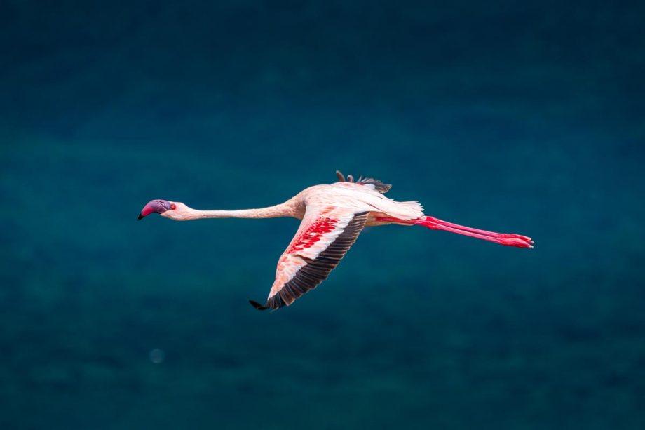 Wandbild Flamingo am Lake Bogoria 3