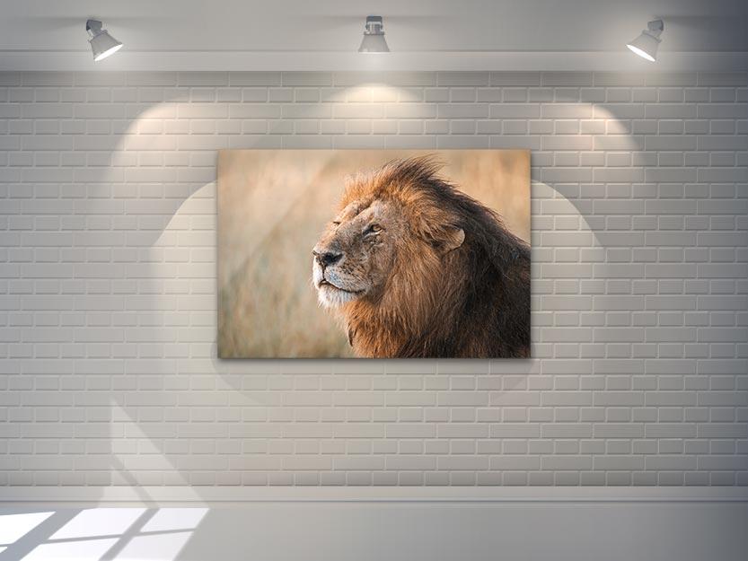 Africa Wildlife - Wandbild - Löwe in der Serengeti 2