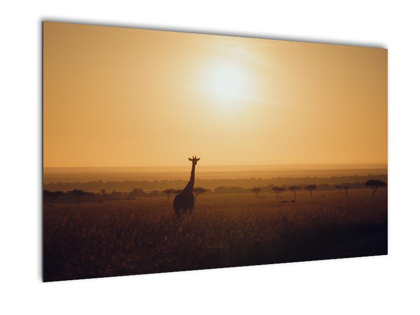 Africa Wildlife - Wandbild - Giraffe in der Morgensonne Kenias 1